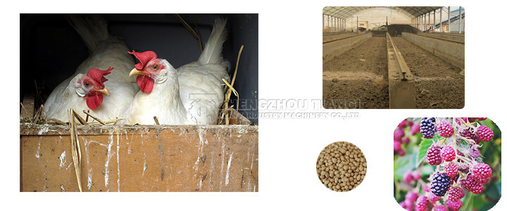 chicken manure organic fertilizer equipment