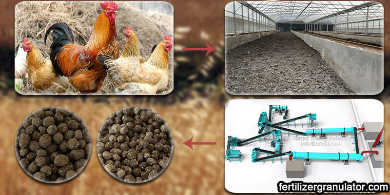 chicken manure products processed by organic fertilizer production equipment